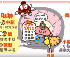 医療翻訳に役立つ無料サイト-WEB玉塾-画像