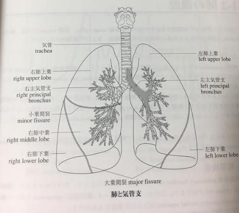 DHC医療翻訳講座-テキストの図-画像